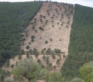 defensa incendios forestales