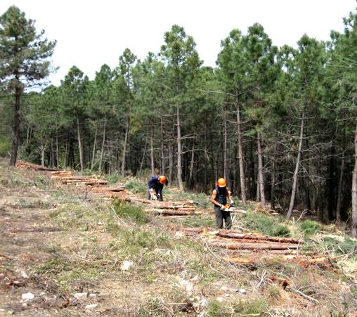 obra forestal