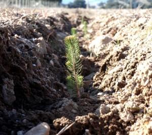 reforestaciones