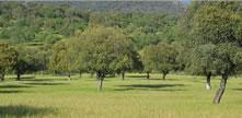Compra - venta de grandes fincas rústicas en España